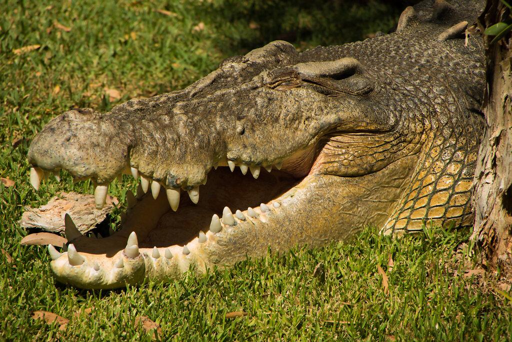 20140118-Australien-Somersby-Reptile-Park-N-0017-Heroes.jpg